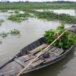 Bestellung der Reisfelder