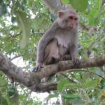 Wildtiere in den Mangroven
